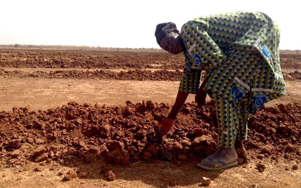 Sowing woman