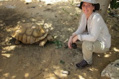 Sulcata turtle one of the species thath as returned