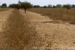 Grasslands even in dry season 2